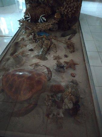 Bohol National Museum: IMG_20180714_084624_HHT_large.jpg