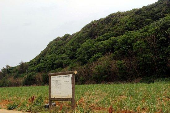 Nagahagu (Gaiheki Oyobi Gaisui no Tokushu Shokubutsugunraku)