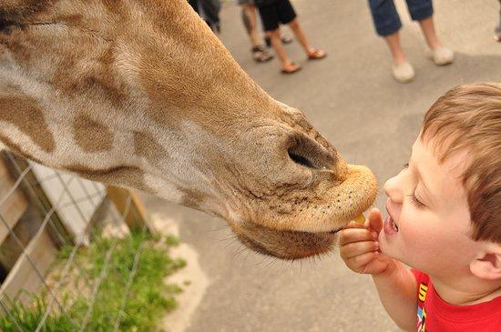 Aloha Safari Zoo: Feeding...