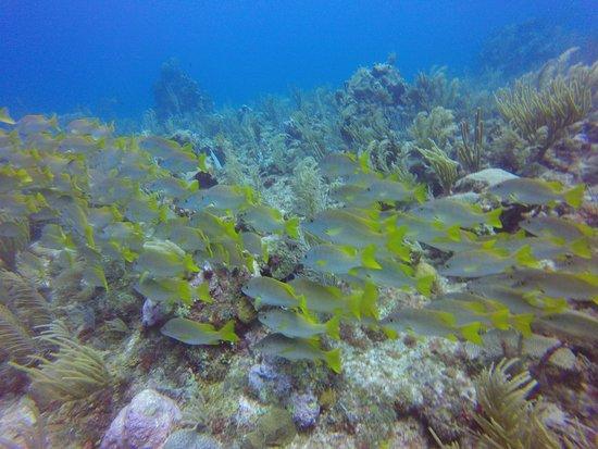 Blue Wave Divers 사진