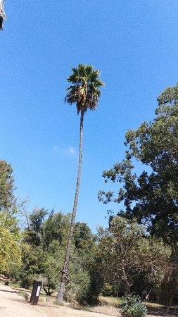 Ilanot Forest: יער אילנות