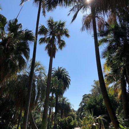 Royal Botanic Gardens Victoria: photo2.jpg