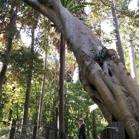 Royal Botanic Gardens Victoria: photo3.jpg