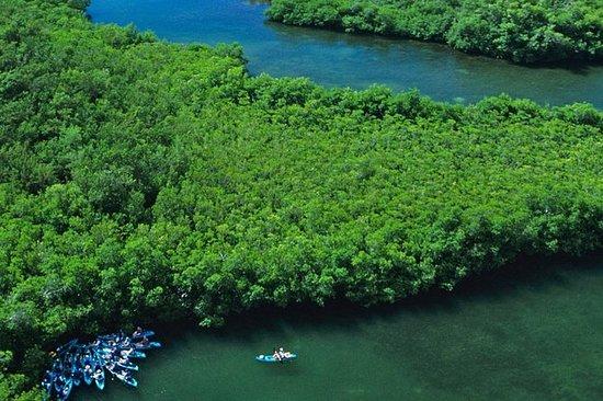 Bästa av Mangrove Lagoon Adventure
