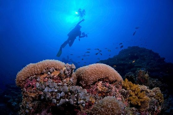2 Tank Barrier Reef Buceo de Hopkins