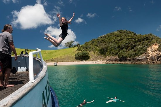 Half-Day Bay of Islands Cruise with...
