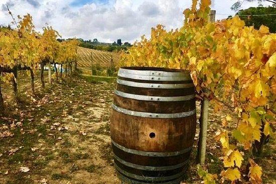 Chianti Wine e Vinci Tour de meio dia...