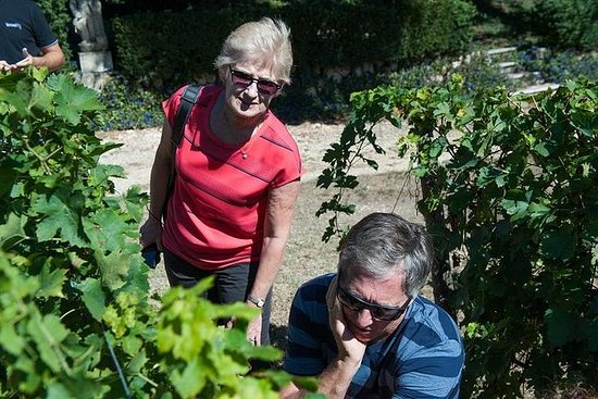 Verona para amantes del vino
