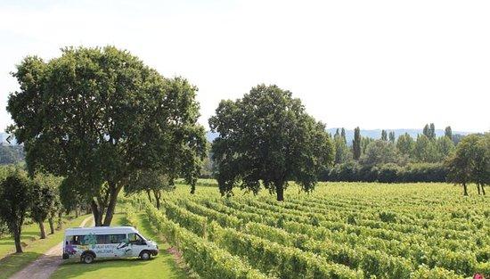 Wijntour door Sussex Vineyard &amp ...