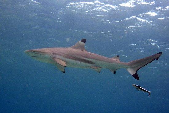 Shark Snorkel Eco Tour de la isla Phi...