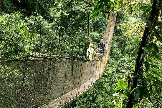 Rainmaker Park Hanging Bridges...