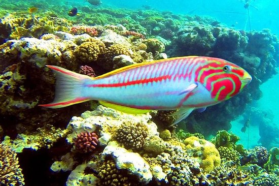 Van Hurghada: Sharm El Naga Full-Day ...