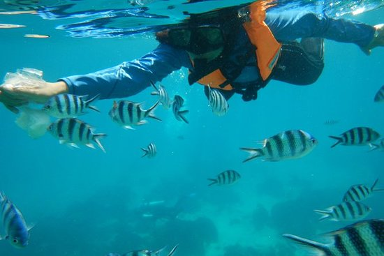 Full day snorkeling adventure in the...