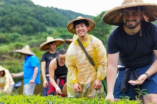 Discover Tea Culture with Master of...