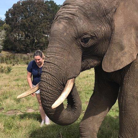 Garden Route, جنوب أفريقيا: The Big Tree e o Knysna Elephant Park
