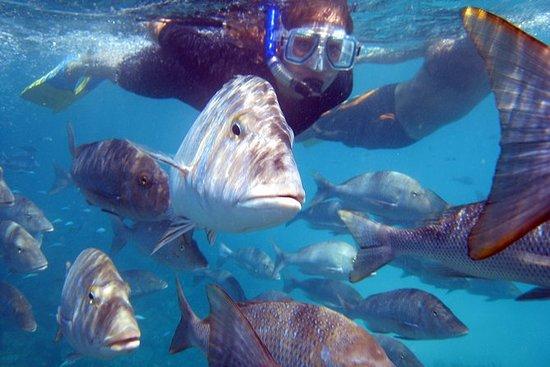 Observation des coraux et plongée en...