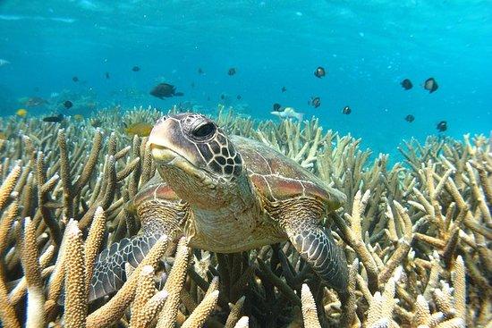 3 Stunden Schildkröte Ecotour