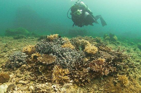 Dive Brunei