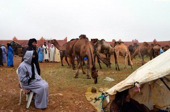 Zaterdag wekelijks Camel Market