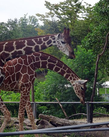 Saitama Children Zoo