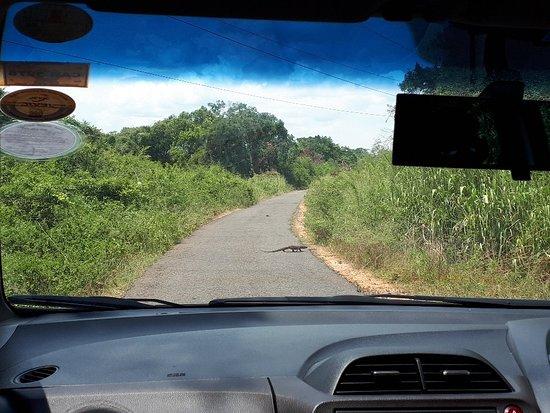 Western Province, Sri Lanka: 20180924_113854_large.jpg