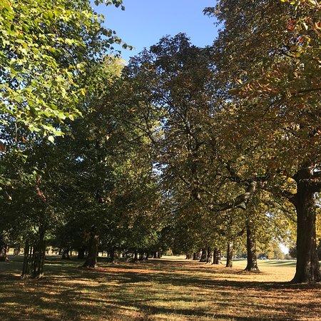 Bushy Park: photo0.jpg