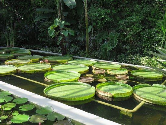 Excellent botanical gardens of villa taranto ne pas for Giardini terrazzati immagini