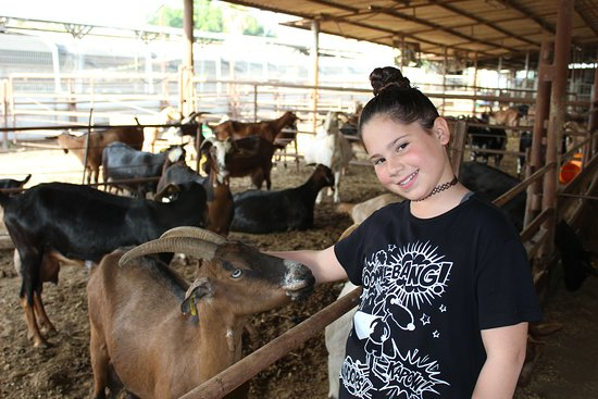 Shmueli Farm