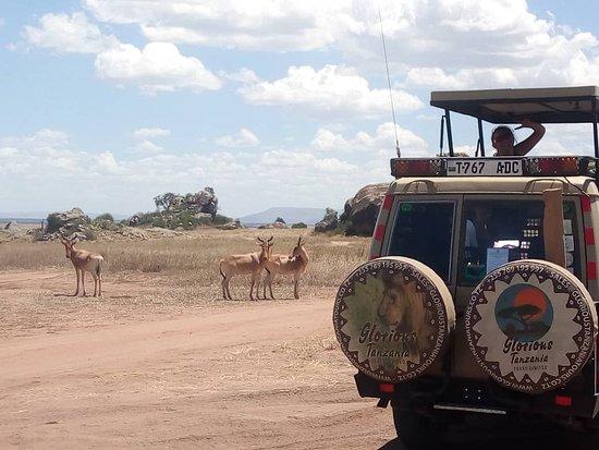 Glorious Tanzania Tours