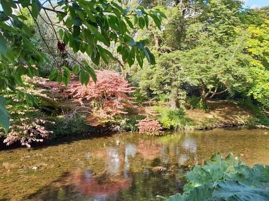 Mount Usher Gardens-billede