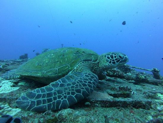 Oceanus Divers