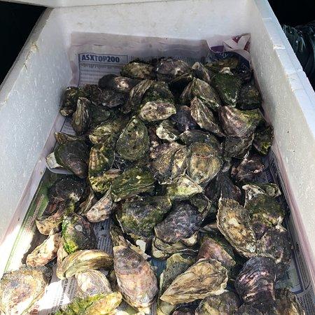 Jim Wilds Oyster Service: photo0.jpg