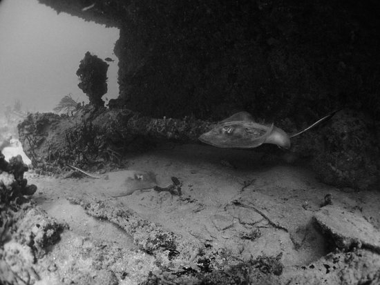 Petit St.Vincent: Ray Flying by at the stern of the wreck