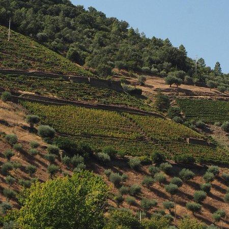 Jorge Barefoot - Wine & Tours: photo3.jpg