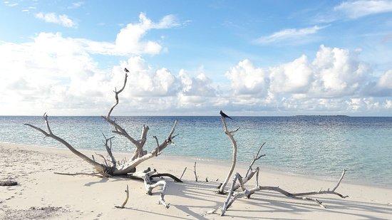 Omadhoo Island: 20180924_170752_large.jpg