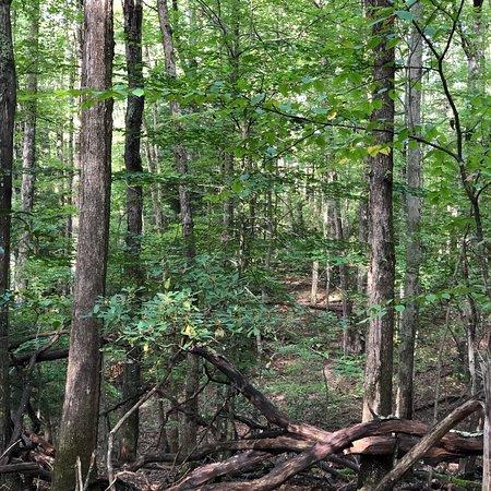 Clifftop, Западная Вирджиния: photo1.jpg