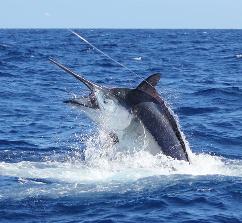 Hawaii Marlin Fishing
