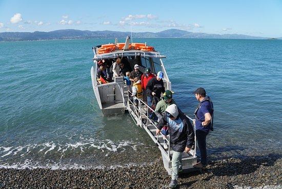 Kapiti Island Eco Experience