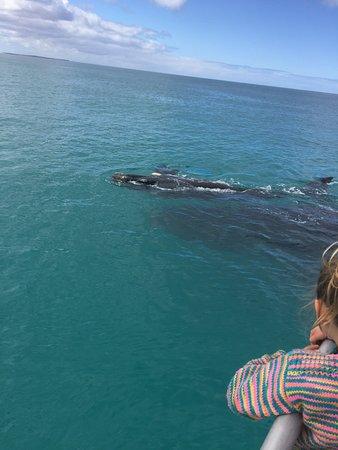 Fowlers Bay, ออสเตรเลีย: So close