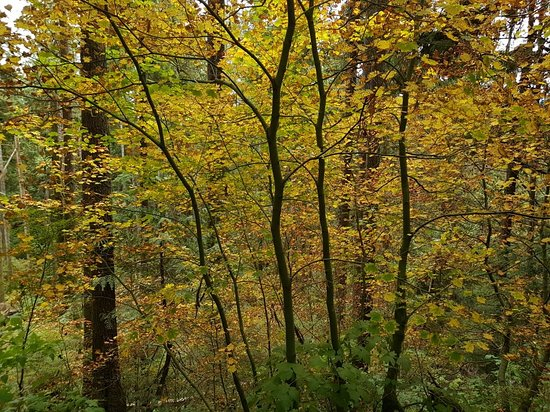 Crooked River Ranch, ออริกอน: Beautiful fall colours on the Steelhead Falls walk.