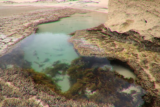 Portsea, Austrália: Another tide pool