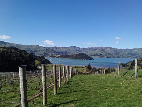 Akaroa, نيوزيلندا: Beautiful day in paradise! From the top of French peak wines
