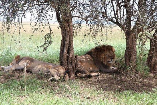 6 days Safari Programe
