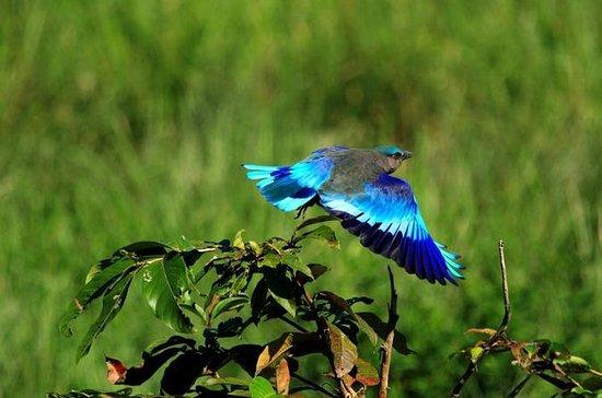 Disfrute del santuario de aves Keoladeo...