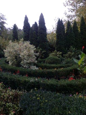 Botanical Garden of Professor I. S. Kosenko: Какие пирамидальные туи.