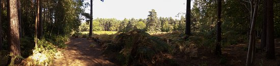 Finchampstead, UK: View across heathland just as leaves are starting to turn.
