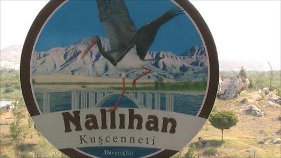 Nallihan照片