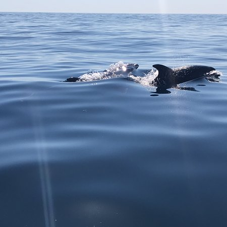 Dolphins Driven : photo0.jpg