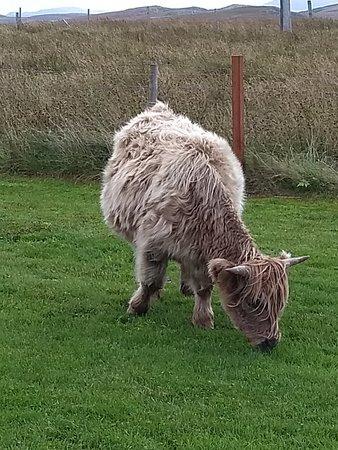 Callanish, UK: IMG_20180924_144900296_large.jpg
