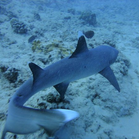 The Top Oahu Shark Diving Tours W S
